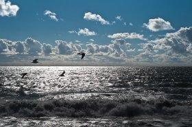 ocean-iledere