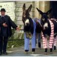 Chaque été, les ânes en culotte de l'île de Ré se rendent à la Barbette (Saint-Martin de ré) pour permettre aux enfants de faire une promenade autour du parc à […]