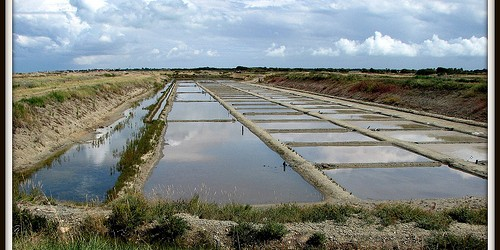 La vie des marais salants sur l'ile de ré Au printemps, le saunier a nettoyé sa part du russon d'écour, coupé brandes, tamarins et palissiats, curé le mort avec son […]